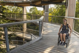 Free as a bird. On treetops in Mecklenburg-Vorpommern you learn a lot about the nature and enjoy the view through and over the tree tops. The treetops are accessible to people with disabilities.