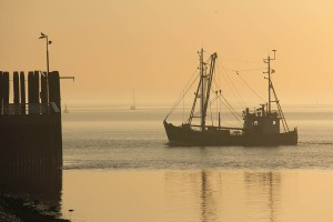 Fishing cutter at sunset