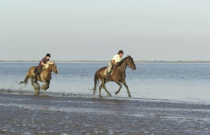 Galloping over the mudflats