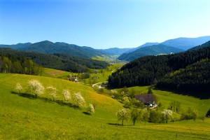 Black Forest countryside