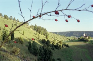 Gungolding juniper heath – one of the finest examples of this typical Altmühl valley landscape