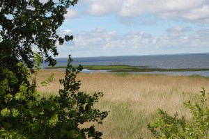 The view past a group of trees reveals the wide reed beds of the unspoilt lagoon coastline