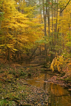 The Briese river winds through colourful mixed deciduous forest in autumn