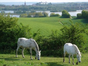 Horses on a sloping meadow with Lake Trammer and the town of Plön in the distance