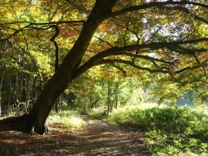 Woodland walking trail in autumn