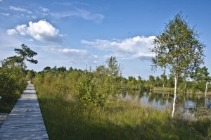 A boardwalk runs through the Pietzmoor peat bog. Water, birch trees, pines and various grasses can be seen.