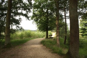 Walking trail in Elmpter Schwalmbruch Nature Park