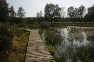 Board walk in Elmpter Schwalmbruch Nature Park