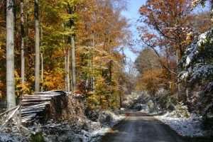 A sprinkling of snow covers the colourful autumn leaves on trees along the Old Ridgeway.