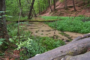 The sandy stream in Furlbachtal conservation area
