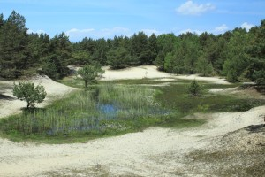 Sand dunes in the Peenemünder Haken, Struck and Ruden Island conservation area