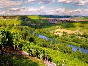 Vineyards by the Neckar river