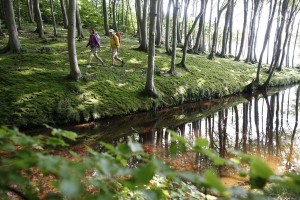 Set your own pace on your hiking trail in Mecklenburg-Vorpommern