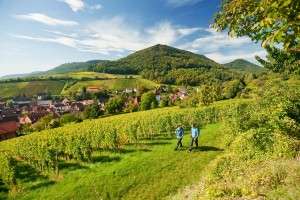Palatinate Wine Trail
