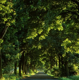 Brandenburg, Tree-lined avenue