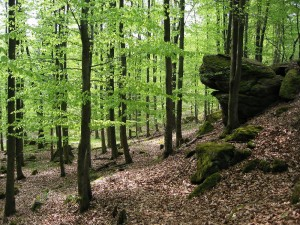 Vogelsberg hills, Rock formations in Herbstein