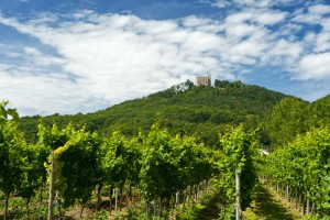 Near Hambach Castle, wine-growing estate