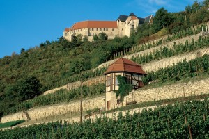 Freyburg, vineyards and Neuenburg Castle