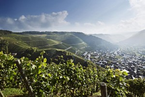 The Ahr wine region