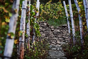 Nahe, rows of vines