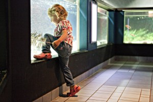A young visitor marvels at a display tank at the Geomar aquarium