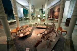 Karlsruhe: State Museum of Natural History, skeletons and fossils