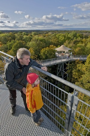Learning about the environment on the treetop walk in Hainich National Park