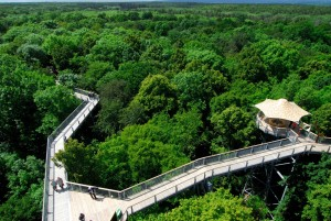 Treetop walk in Hainich National Park